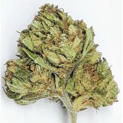 CBD marihuana konopí květy palice – SubZero 1g