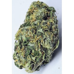 CBD marihuana konopí květy palice – White Widow 1g