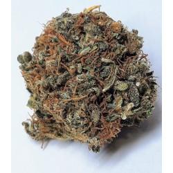 Limitovaná edice CBD marihuana konopí květy palice – Ferrari 1g
